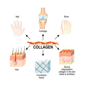 Collagen Shutterstock
