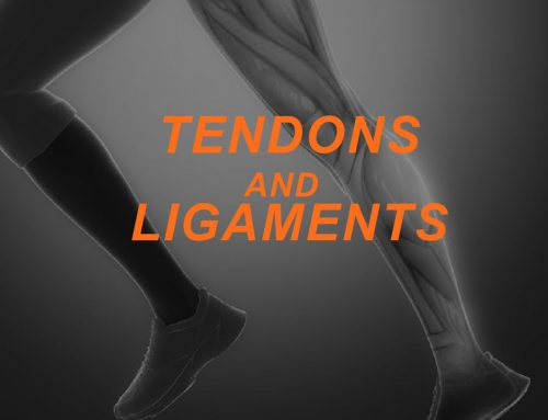Understanding Connective Tissue: Tendons and Ligaments