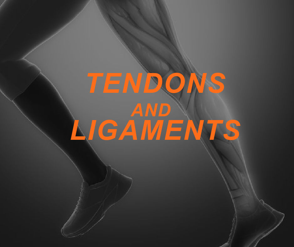 Featured Image TENDONS AND LIGAMENTS