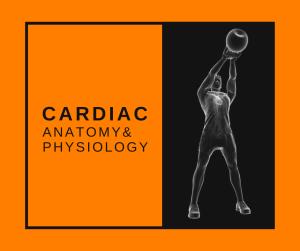 Featured Image Cardiac A&P