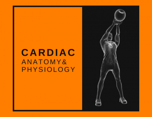 The Human Heart: Basic Cardiac Anatomy and Physiology for the Personal Trainer