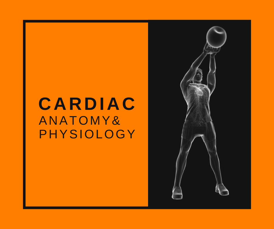 Featured Image Cardiac A&P
