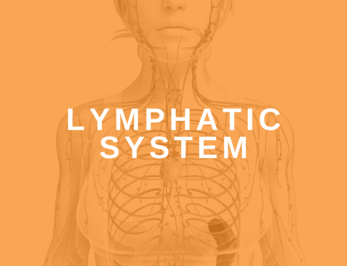 The Lymphatic System: Tuning the Other Half of a Client's Circulatory System