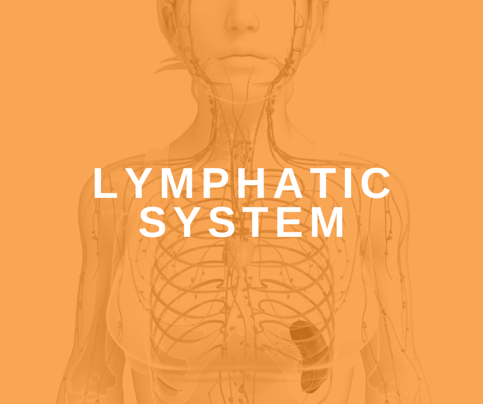 Featured Image Lymphatic System