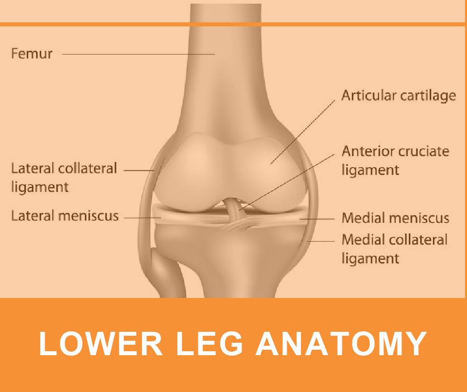 LOWER LEG ANATOMY2