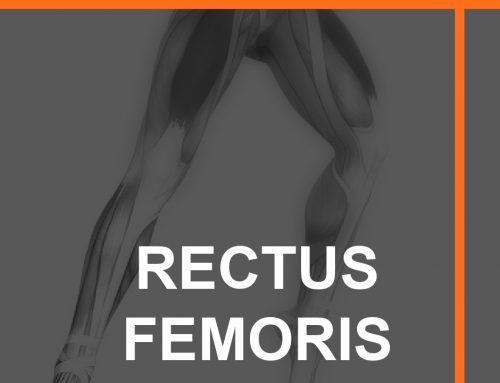 Understanding and Training Rectus Femoris