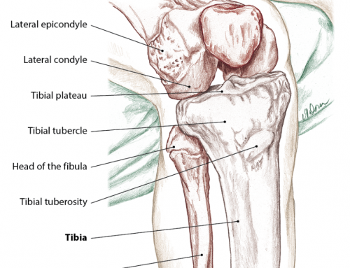 Knee Anatomy Structure and Injuries