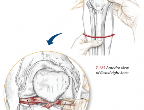 Meniscus Anatomy and Injuries