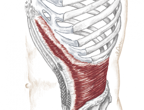 Understanding and Training Transverse Abdominus