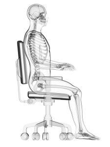 3d Rendered Medical Illustration Correct Sitting Posture