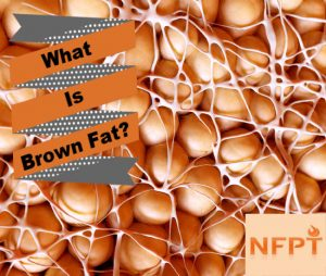 Brown Fat Cells
