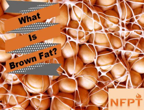 Brown Fat Cells and Thermogenesis