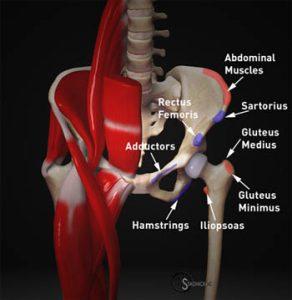 Pelvic Attachments