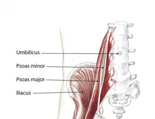 Why The Psoas Is Significant