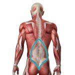 Thoracolumbar Fascia Junction Back Pain Location